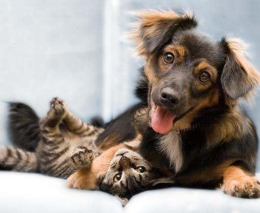 Собаки vs кошки: кто умнее