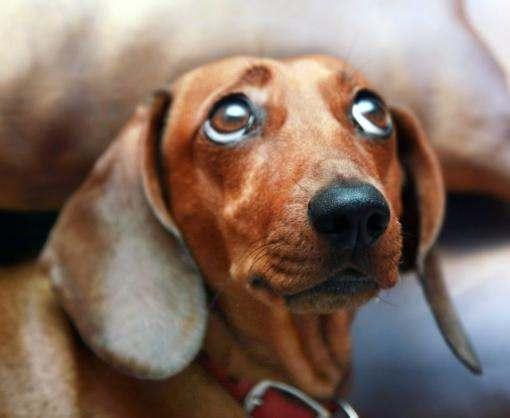 В Харькове собираются установить собачий рекорд