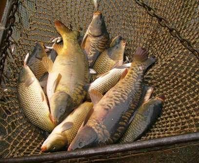 В Харьковской области запретят ловить рыбу