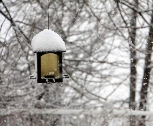 Погода в Харькове: снег еще «порадует»