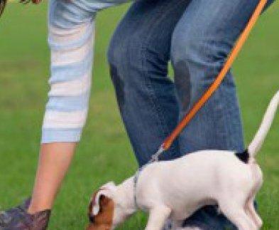 Харьков продолжают делать комфортным для собак
