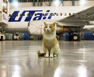 Как перевезти кота из-за границы