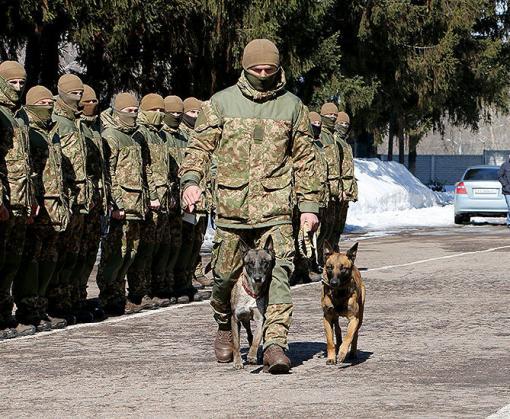 В Харькове наградили служебных собак