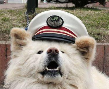 В Японии пес стал начальником железнодорожного вокзала
