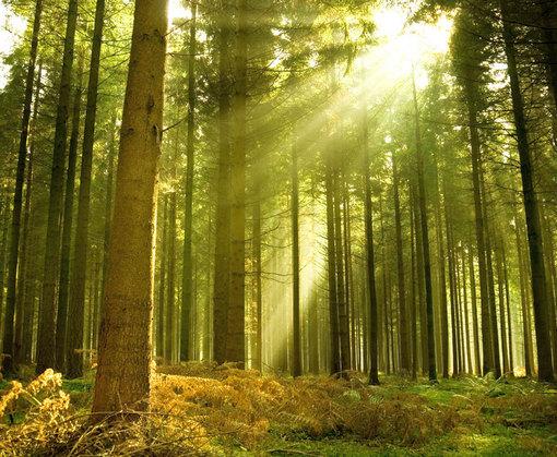 В лесу на Харьковщине объявили режим тишины
