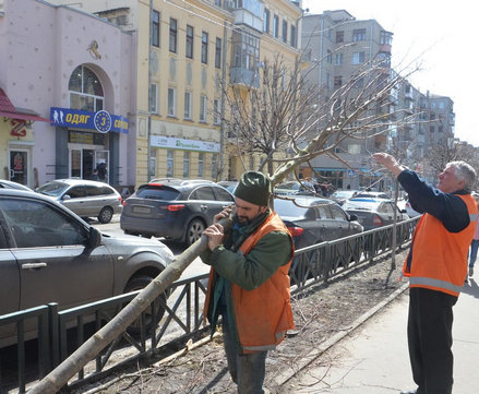 Харьков обсадят деревьями