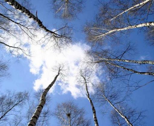 Погода в Харькове: без существенных осадков