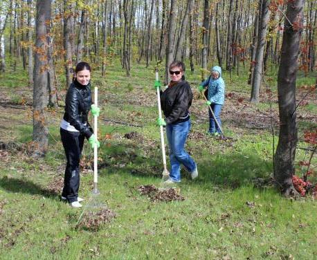 В Харьковской области высадят 60 тысяч деревьев