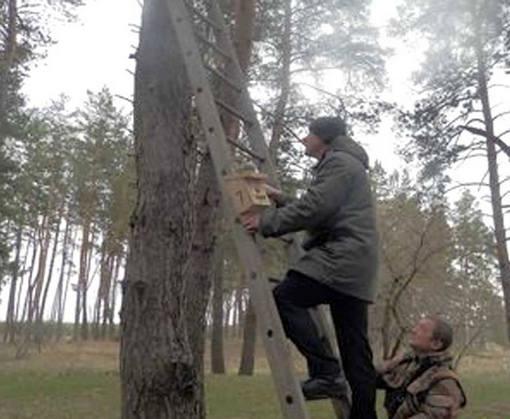 В харьковских лесах разводят птиц, уничтожающих насекомых