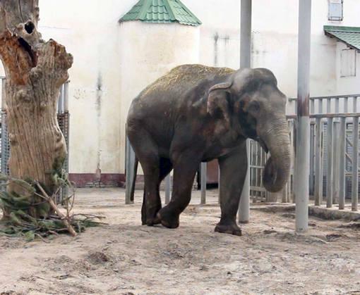 В Харьковском зоопарке на прогулку вывели слонов: видео-факт