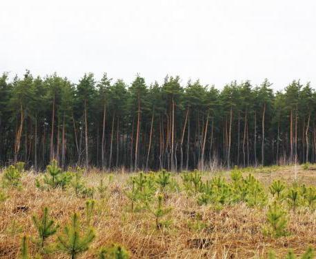 В Харькове очертили противопожарные меры в лесах