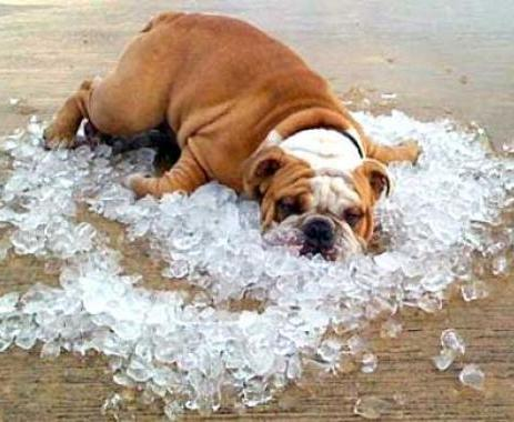 Погода в Харькове: пошла жара