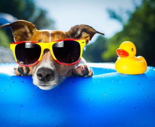 Как спастись от летнего зноя: рекомендации Минздрава