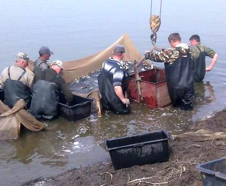 Водоемы Харьковской области зарыбляют