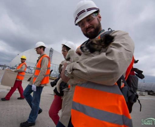 Две сотни бездомных щенков из зоны отчуждения ЧАЭС уедут в США