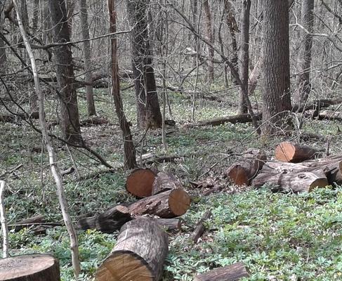 В Харьковском лесопарке поймали браконьера
