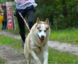 В Харькове пройдет массовый забег с собаками