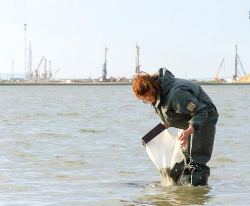Крымский мост: экологи предупреждают о последствиях