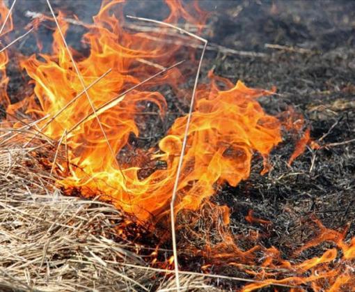 На Харьковщине сохраняется высокая пожароопасность