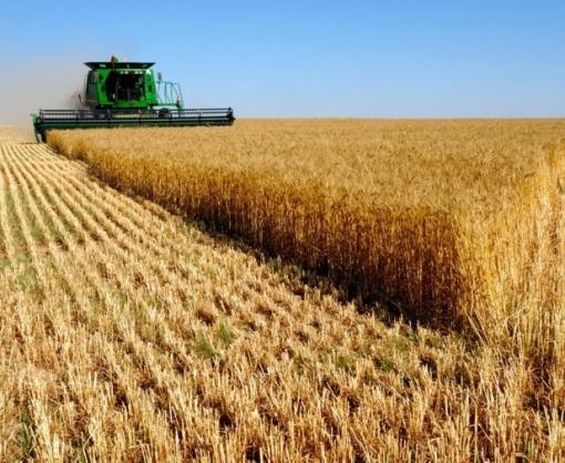 Синоптики дали прогноз по урожаю пшеницы в этом году