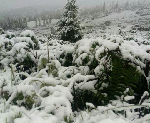 Карпаты завалило снегом: спасатели эвакуировали отдыхающих