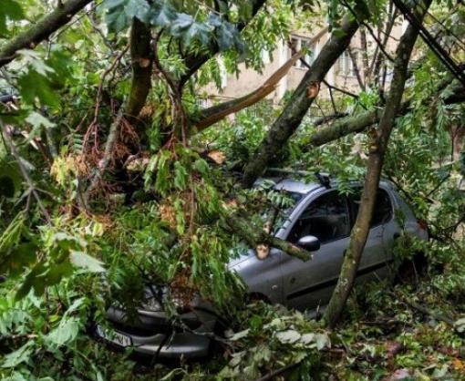Под Харьковом стихия повалила деревья