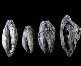 Найдены остатки древнейшего шведского пива