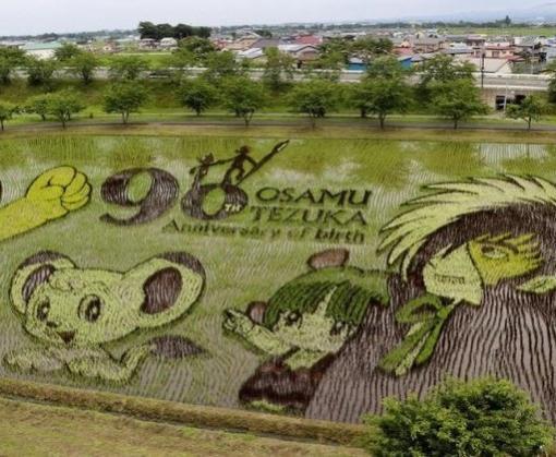 В Японии украсили рисовые поля масштабными 3D-рисунками: фото