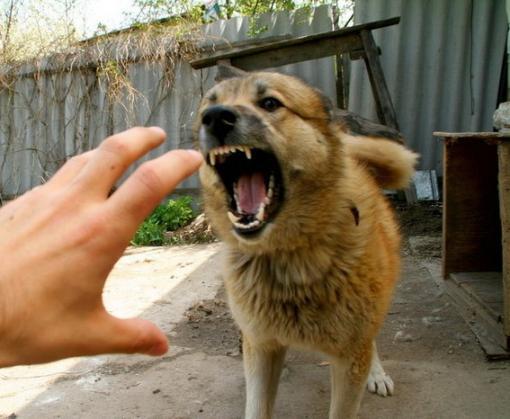 В Харькове собаки стали чаще нападать на людей