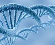 Ученые научились лечить облысение и морщины