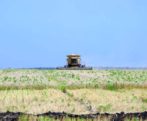 На Харьковщине завершается сбор ранних зерновых