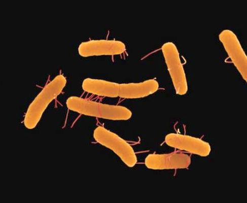В харьковском гипермаркете изъяли кукурузу с бактериями