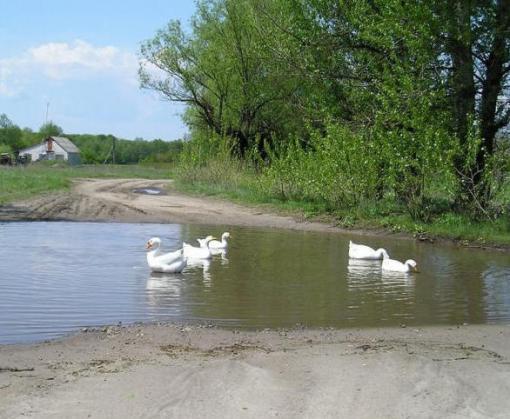 В реке под Харьковом нашли кишечную палочку