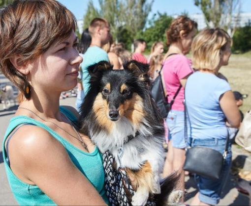 В Харькове прошла акция помощи бездомным животным