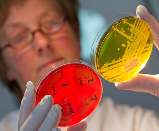 «А поутру они проснулись»: некоторых харьковчан атакуют кишечные инфекции
