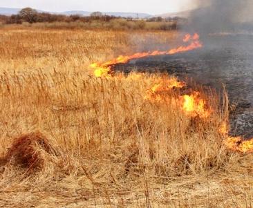 Пожар в Харькове: на Верещаковке пять часов работали спасатели
