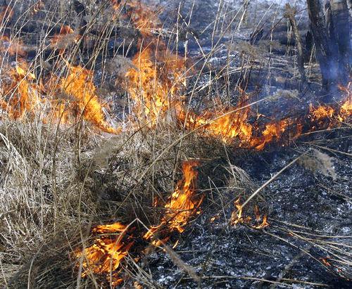 Пожар на Харьковщине: в горящей траве погибла женщина
