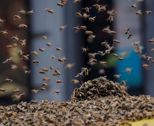 Десятки тысяч пчел атаковали жителей Нью-Йорка