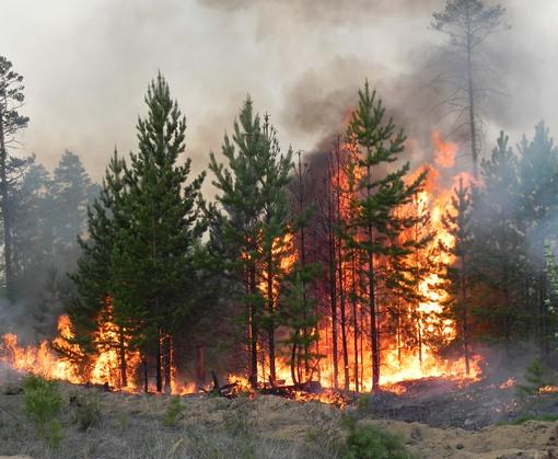 В Харьковской области вторые сутки тушат лесной пожар
