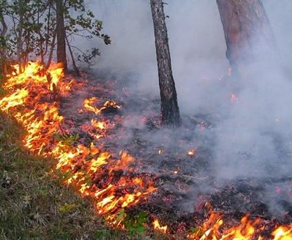 В Харьковской области сохраняется повышенная пожароопасность