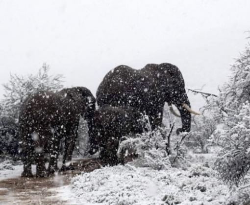 Юг Африки засыпало густым снегом
