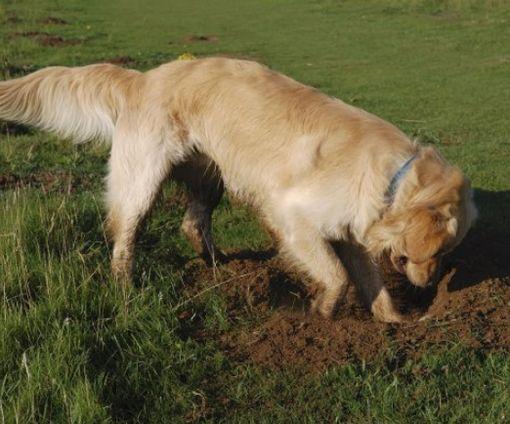 В Чехии собака помогла найти клад бронзового века: фото-факт