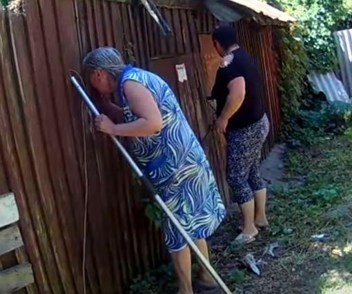 В Харькове успешно завершилась операция по спасению «потеряшки»: видео-факт