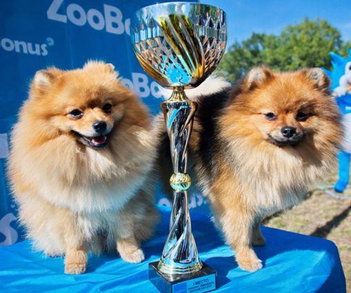 В Фельдман Экопарк проводили сентябрь грандиозной выставкой собак