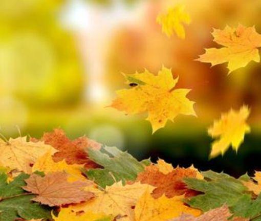 Харькову объявили отличную осеннюю погоду