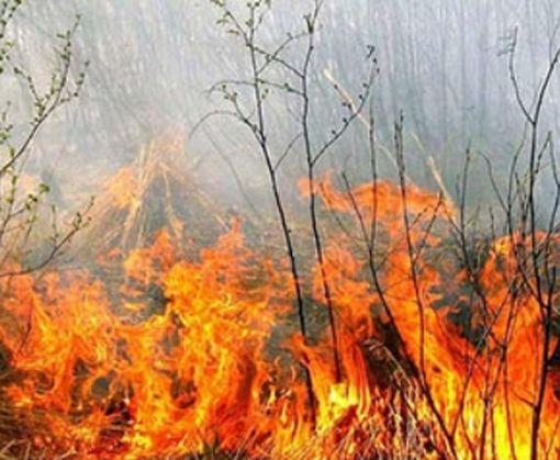 Под Харьковом вспыхнул крупный пожар: фото-факт
