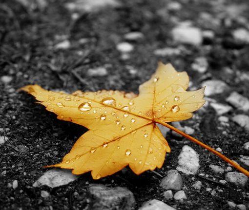 Настоящая осень: синоптики рассказали о погоде в ближайшие дни