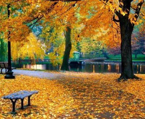 Погода в Харькове: осень наступила