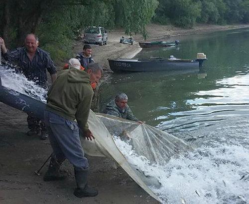 Водоемы Харьковской области заполнили молодыми особями