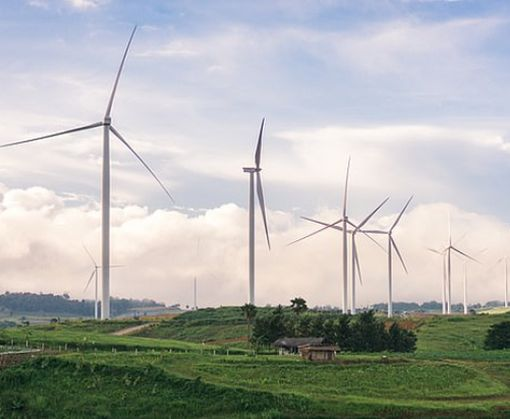 Ученые назвали ветряные турбины «хищниками современности»